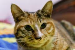 Chinesische Katze - Drache-Li Stockfotografie