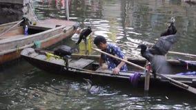 Chinesische Kormorane auf Boot stock footage