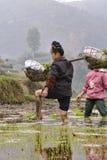 Chinesische ländliche Frau geht barfuß durch Schlamm von Reisfeldern Lizenzfreies Stockfoto