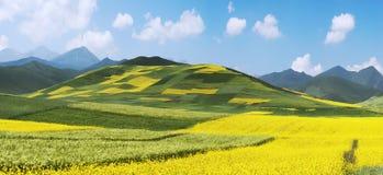 Chinesische Landschaft, Raps-Feld Lizenzfreie Stockfotos