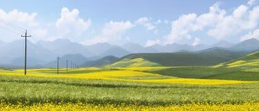 Chinesische Landschaft, Raps-Feld Lizenzfreies Stockfoto