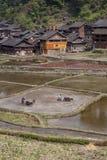 Chinesische Landwirte pflügen das Land unter Verwendung der Energie von Kühen Lizenzfreie Stockfotos
