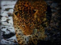Chinesische Leopardkunst stockbild
