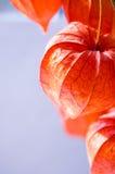 Chinesische Lilienlaterne stockbild