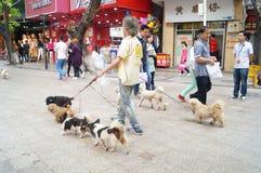 Chinesischer alter Mann, der einige Hunde in der Straße hält Stockbilder