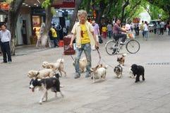 Chinesischer alter Mann, der einige Hunde in der Straße hält Stockbild
