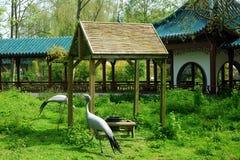 Chinesischer Garten Lizenzfreie Stockbilder