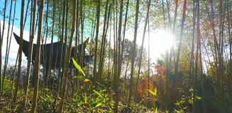 Chinesischer Garten Stockfotos