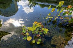 Chinesischer Garten in Portland Oregon stockfotografie