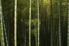 Chinesischer Gebirgswald Lizenzfreie Stockfotografie