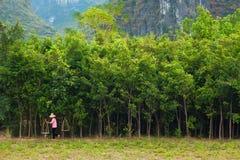 Chinesischer Landwirt Stockbild