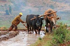 Chinesischer Landwirt arbeitet auf einem Reisgebiet Lizenzfreie Stockfotografie