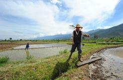 Chinesischer Landwirt arbeitet auf einem Reisgebiet Lizenzfreie Stockbilder