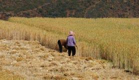 Chinesischer Landwirt arbeitet auf einem Reisgebiet Lizenzfreies Stockfoto