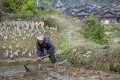 Chinesischer Landwirt bearbeitet den Boden im Reispaddy unter Verwendung der Hacke Lizenzfreies Stockfoto