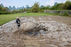 Chinesischer Landwirt, der mit asiatischem Büffel pflügt lizenzfreies stockbild