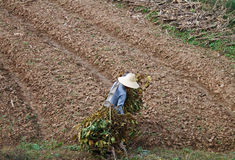 Chinesischer Landwirt Stockfotografie