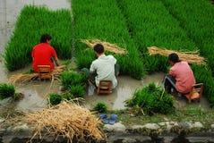 Chinesischer Landwirt in Sichuan Stockfotografie