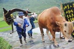 Chinesischer Miao Nationalitätslandwirt mit Büffel Stockbild