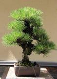 Chinesischer miniture Garten Lizenzfreie Stockfotos