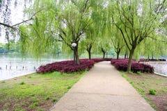 Chinesischer Park. Stockbilder