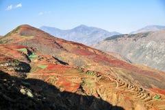 Chinesischer Terrassenbauernhof mit rotem Boden Lizenzfreie Stockfotografie
