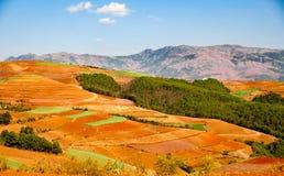 Chinesischer Terrassenbauernhof mit rotem Boden Lizenzfreies Stockfoto