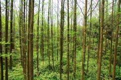 Chinesischer Wald Stockbilder