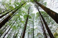 Chinesischer Wald Lizenzfreies Stockbild