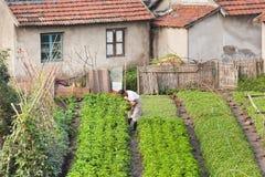 Chinesisches älteres beschäftigtes in seinem Garten, Shanghai, China Lizenzfreies Stockfoto