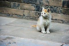 Chinesisches Kätzchen Stockfotos
