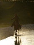 Chinesisches kasachisches Hirtfahrpferd stockfotografie