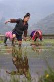 Chinesisches Landwirtmädchen geht barfuß durch Schlamm des Reisfelds Stockfotos