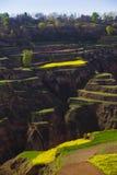 Chinia da montanha da terra da mola fotos de stock
