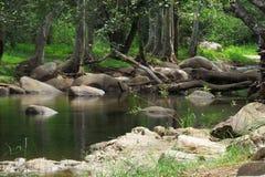 CHINNAR WILDLIFE SANCTURY. Chinnar Wildlife Sanctuary, (CWS), is located 18 km north of Marayoor on SH 17 in the Marayoor and Kanthalloor Panchayats of Devikulam Royalty Free Stock Photo