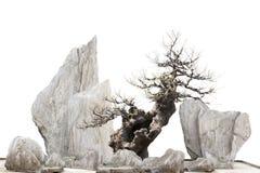 Chino - árbol y piedras japoneses del bonsi foto de archivo