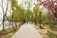 Chino de Asia, Pekín, parque de Yuyuantan, el paisaje que cultiva un huerto fotos de archivo