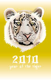 Chino del tigre Imagen de archivo libre de regalías