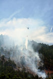Chinook Firefighting Helicopter Drops Water on a Forest Fire in Stock Photo