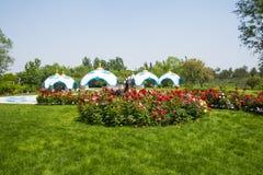 Chinês de Ásia, Pequim, expo do jardim, arquitetura paisagística, ¼ ŒRose do packageï de Mongólia na flor completa Imagem de Stock Royalty Free