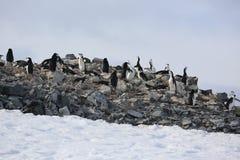 Chinstrap企鹅群在南极洲 库存照片