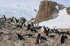 Chinstrap企鹅群在南极洲 免版税库存照片