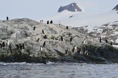 Chinstrap企鹅谢尔瓦小海湾,南极洲 库存图片