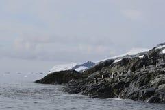 Chinstrap企鹅谢尔瓦小海湾,南极洲 库存照片