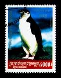 Chinstrap企鹅Pygoscelis南极洲, Pinguin serie,大约2001年 免版税库存照片