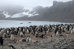 Chinstrap有迷雾山脉的企鹅殖民地在背景中 库存图片