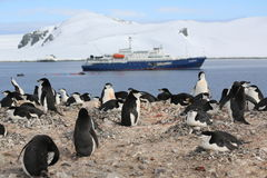 Chinstrap penguin rookery in Antarctica. Chinstrap penguin rookery (Pygoscelis antarctica) with a cruise ship in the background in Antarctica Stock Image