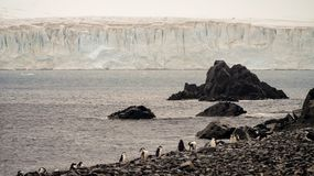 Chinstrap Penguins ad huge iceberg on Half Moon island in Antarctica. royalty free stock photo