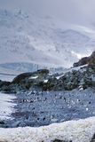 Chinstrap penguins colony on a beach in Antarctica Royalty Free Stock Images