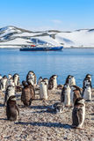 Chinstrap penguins crowd standing on the rocks and touristic cru. Gentoo penguins standing on the rocks and cruise ship in the background at Neco bay, Antarctica Royalty Free Stock Image